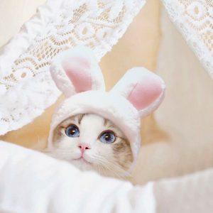 bunny ears1